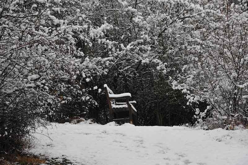 Schnee am Waldhügel